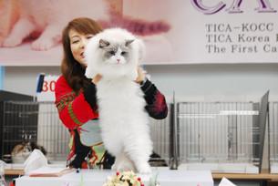 TICA-KOCC 19th, 20th Cat Show