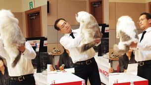 TICA - KOCC 17th, 18th Cat Show