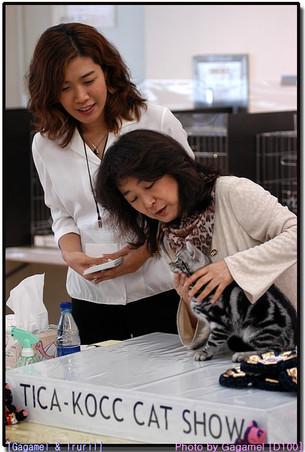 TICA - KOCC 3rd Cat Show
