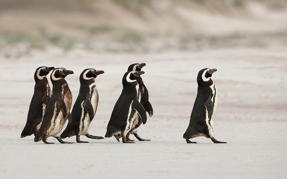 Pingviner i mars.jpeg
