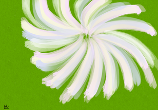 No.813 一輪の恩寵の花_A Flower of Grace