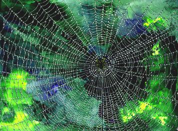 117.「発達の網の目構造」:認知構造における個人差について