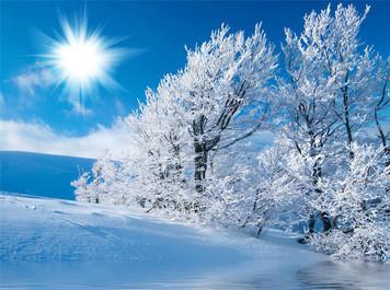 536. 真冬のほふく前進