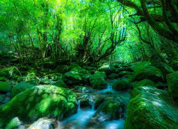 2501. 屋久島を訪れる夢