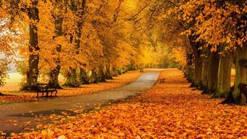 1746. ほのかな秋の一日の断片