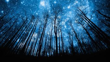 2079. 満天の星空を眺める夢