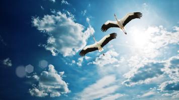 1572. 大空を自由に飛ぶ自由