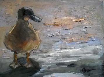 2712. 運河のほとりの一羽のカモ