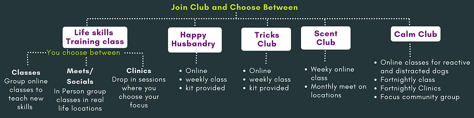membership options (1).png