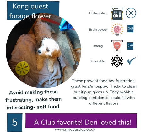 Kong Quest Forager