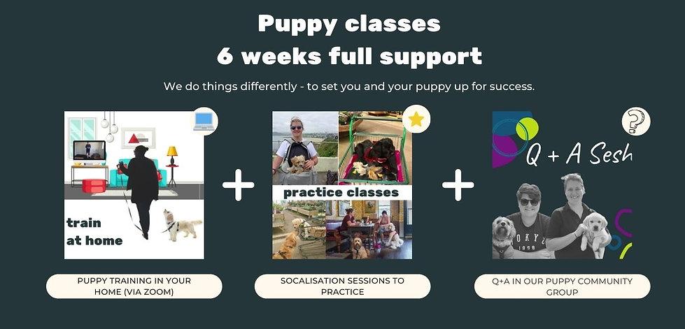 Puppy class (1).jpg