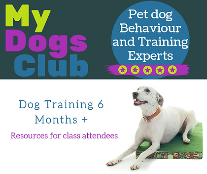dog classes resources .png
