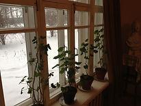 Герани. Дом-музей Б. Пастернака.