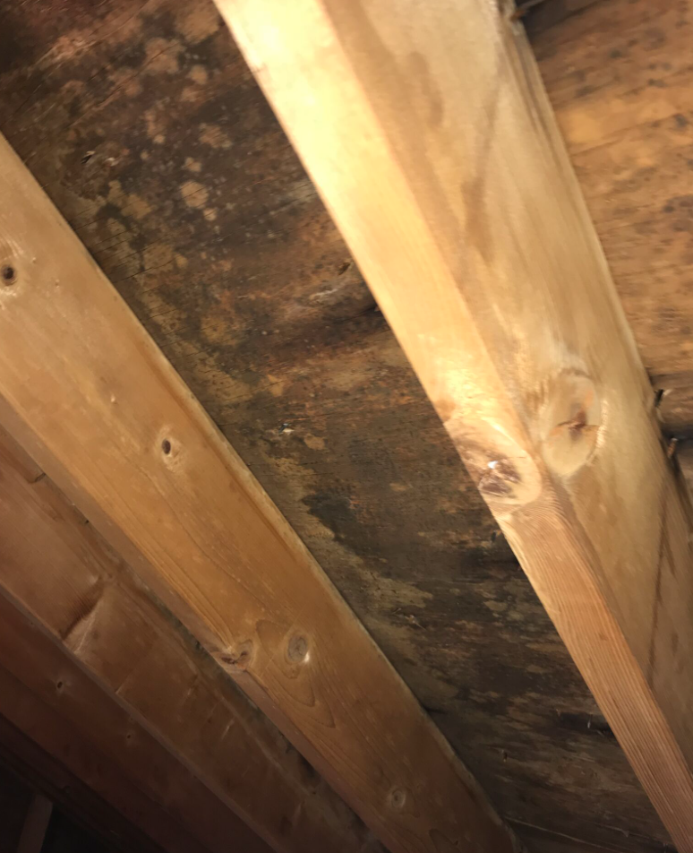 Mold forming in an attic area