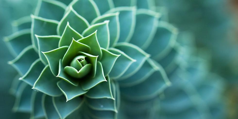 Conférence Alumni Biomimétisme : Comment la nature inspire les innovations durables ?