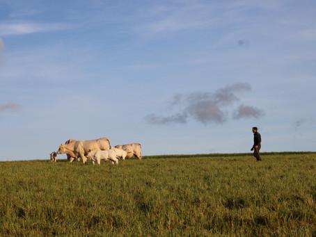 10 ventajas de Vivir en el Campo: Descubre el Encanto de la Francia Rural