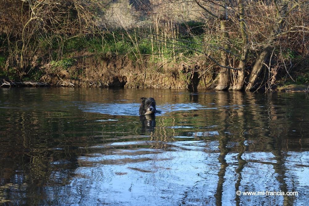 perro en el río