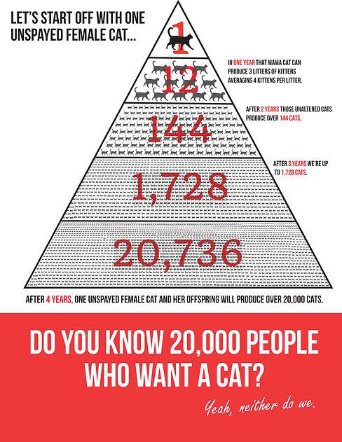 Cat-Overpopulation-.jpg