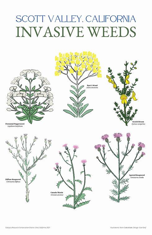 Scott Valley Invasive Plants Poster 11x17.jpg