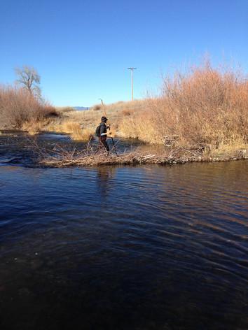 Annual Salmon Surveys