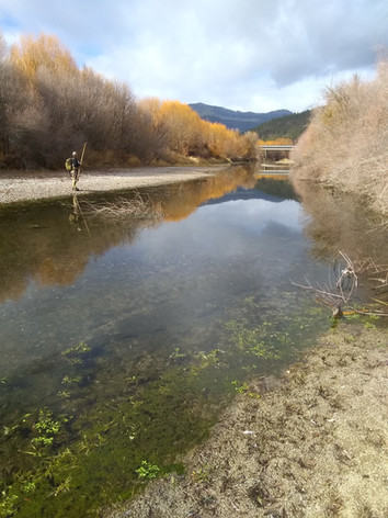 Coho Survey Scott River