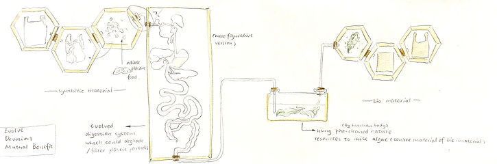 sketch for expected final installation.j