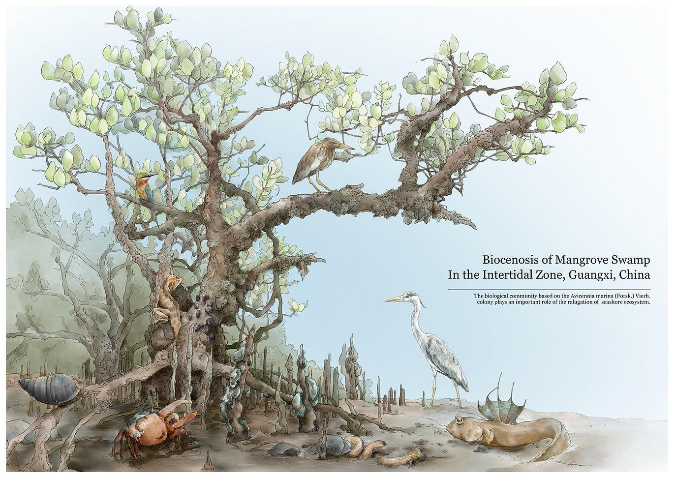 swamp illustration.jpg