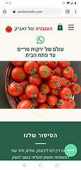 pic of tomato