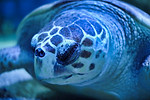 Turtle_TDG.png