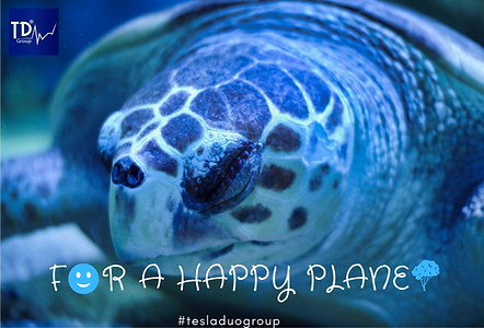Turtle_TDG2.png