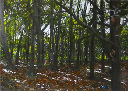 Untitled Trees Painting (QEII - for Craig)