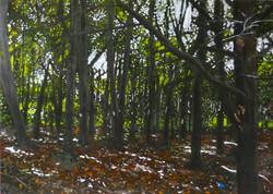 Untitled Trees Painting (QEII - for Craig)
