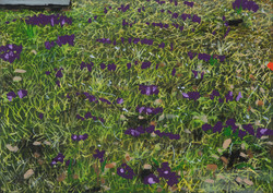 Untitled Flowers Painting (Colliery)