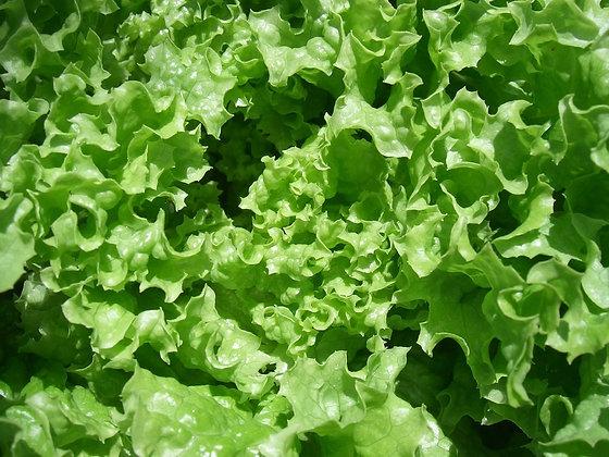 Salade verte avec vinaigrette