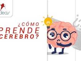 ¿Cómo aprende tu cerebro?
