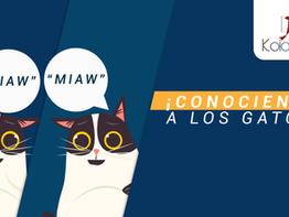 ¡Conociendo a los gatos! Recomendaciones para conocer a tu público objetivo