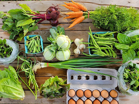 A share of vegetables and eggs for our CSA members