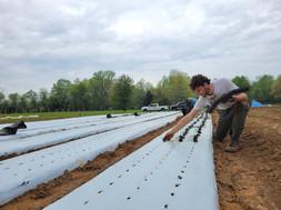 Onion Planting!