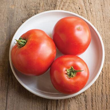 'Big Beef' Tomato