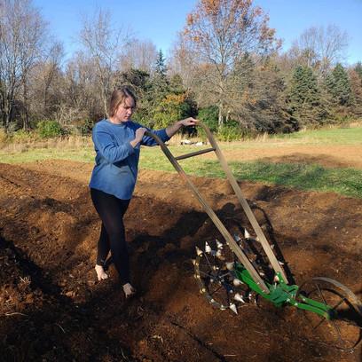 Planting Garlic!