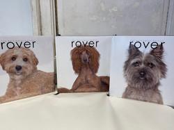Rover Books