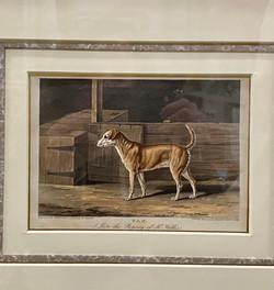 Vintage Framed Dog Engravings
