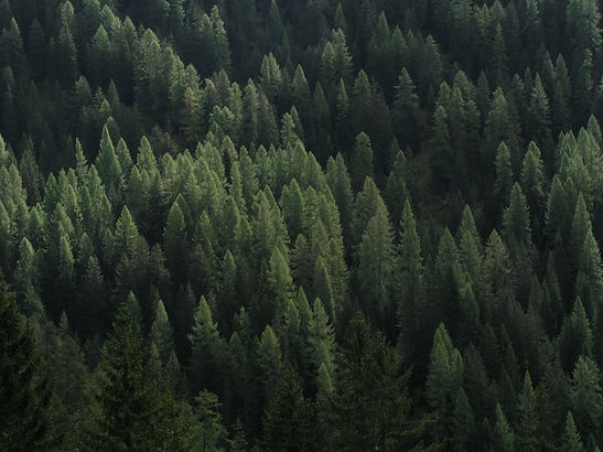 forest-1246147_1920.jpg