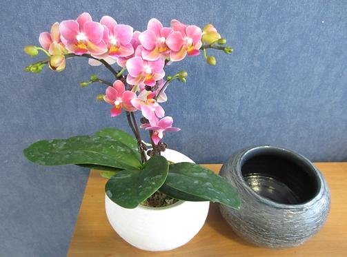 """Orchidée sauvage au choix """"zen"""""""