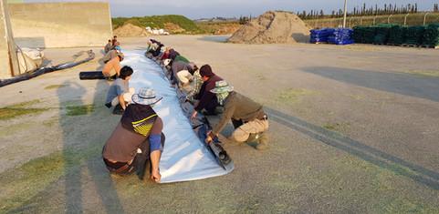 פרויקט חוף השרון 10