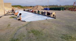 פרויקט חוף השרון 7