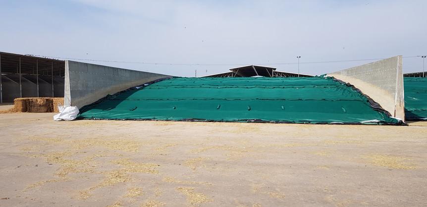 פרויקט חוף השרון 17