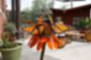 monarchs_on_orange.jpg