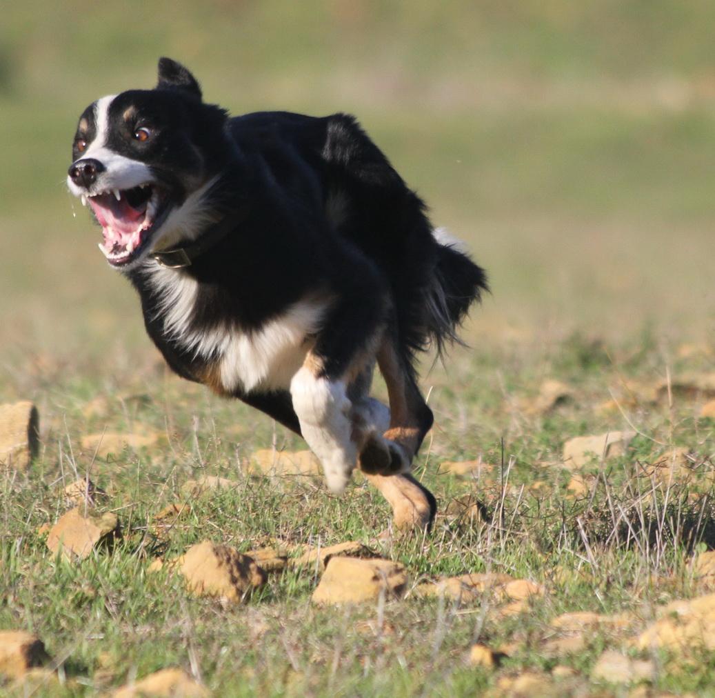 6 Faansie's Tweed fast pace