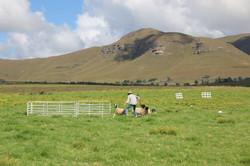 2018 Kokstad field with GerryR